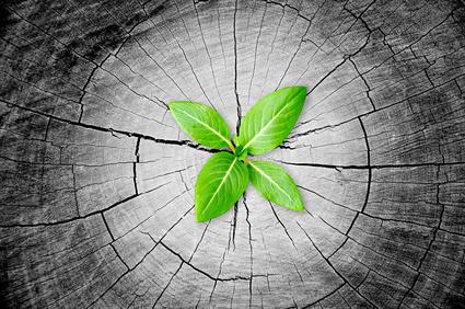 Little green seedling grow from tree stump